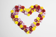Heart shape of chrysanthemum flowers on white background, close up - GWF001636