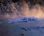 Germany, Bavaria, Upper Bavaria, Geretsried, View of frosted dead plant in River Isar - SIEF002067
