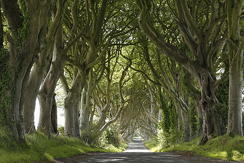 United Kingdom, Northern Ireland, County Antrim, View of empty road through trees - SIEF002127