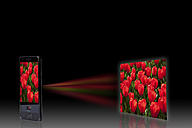 Tulip bed on projection screen through mobile phone, close up - CSF015589