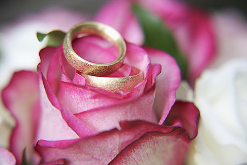 Germany, Bavaria, Wedding rings on rose, close up - RIMF000107