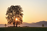 Germany, Bavaria, View of broad leaved tree at sunrise - FOF003853