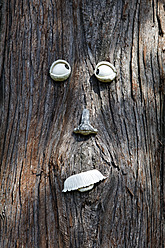 USA, Pine tree trunk with face - ANBF000029