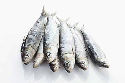 Sardines on white background - MAEF004363