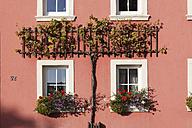 Germany, Bavaria, Garstdt, View of vine on house - SIEF002375