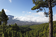 Spain, Canary Islands, La Plama, View of pine forest - SIEF002435