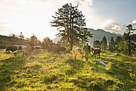 Austria, Salzburg County, Woman and farmer walking in alpine meadow with cows - HHF004011