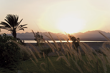 Egypt, View of golf course at sunset - GNF001202
