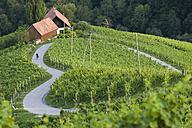 Slovenia, Spicnik, Mature man cycling through vineyard - DSF000430