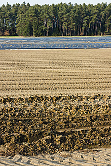 Germany, View of aspargus cultivation in late march - LFF000394
