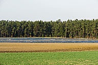 Germany, View of aspargus cultivation in late march - LFF000396