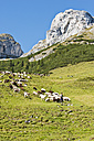 Austria, Salzburg County, Shepherd herding sheep on mountain - HHF004115