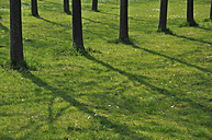 Germany, Bavaria, Shadow of trees on grass - AXF000017