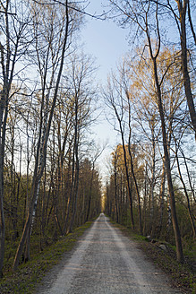 Germany, Bavaria, Munich, View of forest track in autumn - LFF000453