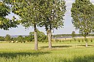 Germany, Saxony, View of solar panels - MJF000022