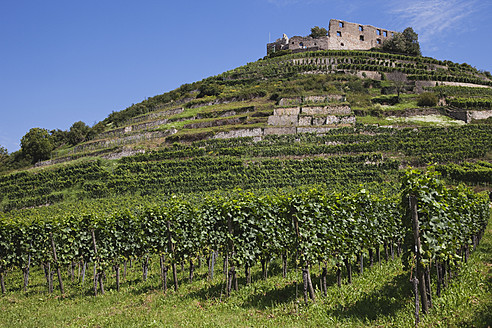 Germany, Baden Wuerttermberg, Staufen, View of vineyard with castle ruin in background - GWF001755