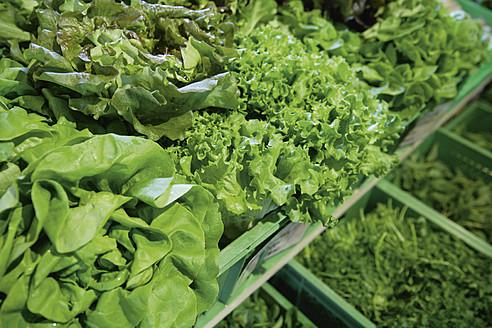 Germany, Bavaria, Variety of leaf vegeatbles at organic food store - TCF002511