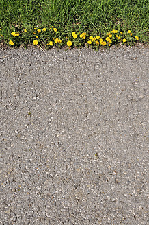Germany, Bavaria, Dandelion growing on asphalt - AXF000073