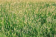 Austria, Field of flowers - WVF000236