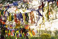 Nepal, Prayer flags in Lumbini - MBEF000375