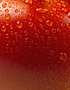 Close up of wet tomato - KSWF000860