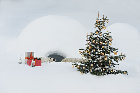 Austria, Salzburg County, Christmas tree and presents in snow in front of igloo - HHF004247