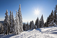 Germany, Bavaria, View of snow covered trees at Bavarian Forest - FOF003898