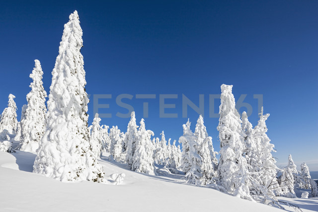 Germany, Bavaria, View of snow covered trees at Bavarian Forest - FOF003900 - Fotofeeling/Westend61