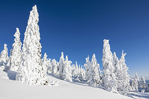 Germany, Bavaria, View of snow covered trees at Bavarian Forest - FOF003900