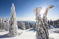Germany, Bavaria, View of snow covered trees at Bavarian Forest - FOF003903