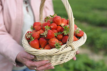 Germany, Saxony, Mid adult woman holding straw basket with strawberries, close up - MJF000050