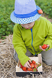 Germany, Saxony, Boy picking strawberry from wooden box, close up - MJF000055