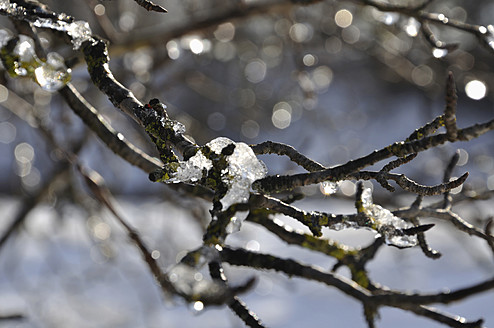 Germany, Bavaria, View of branches covered with ice - AXF000155