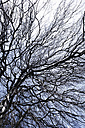 Germany, View of bare tree with branches - TLF000696