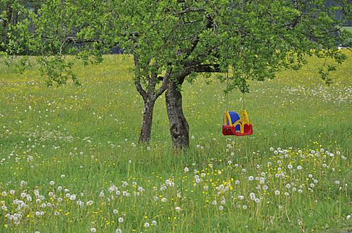 Austria, Childrens swing hanging to tree - AXF000205