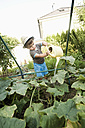 Germany, Bavaria, Boy watering cucumber vegetable in garden - RNF000997