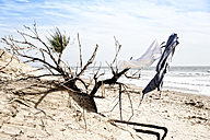 France, Clothes hanging on dry bush in sanddune at Atlantic coast - MSF002721