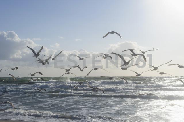 Germany, Mecklenburg Western Pomerania, Seagulls flying at Baltic Sea - MJF000105 - Jana Mänz/Westend61