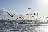 Germany, Mecklenburg Western Pomerania, Seagulls flying at Baltic Sea - MJF000105