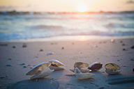 Germany, Mecklenburg Western Pomerania, Shells at Baltic Sea during sunrise - MJF000120