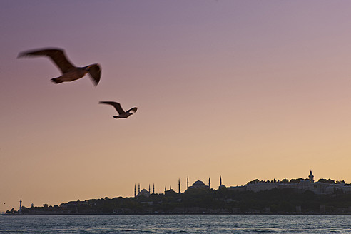 Turkey, Seagulls flying in sky, Blue Mosque in background - FLF000137