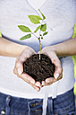 Germany, Cologne, Young woman holding seedling, close up - PDYF000077