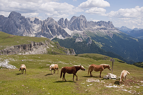 Italy, Horses grazing in meadow, Rosengarten in background at South Tyrol - UMF000428