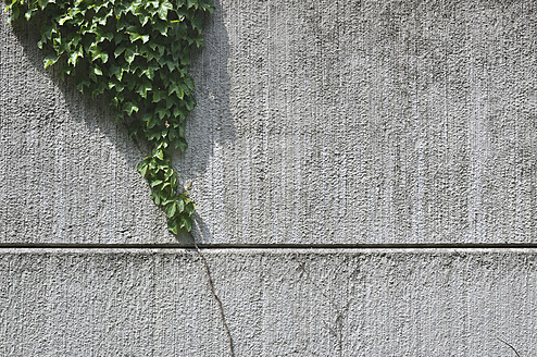 Germany, Bavaria, Ivy growing on wall - AXF000218