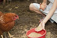 Germany, Brandenburg, Girl feeding hen - BFRF000013