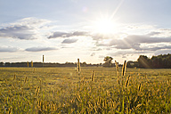 Germany, Brandenburg, View of field meadow during sunset - FKF000044