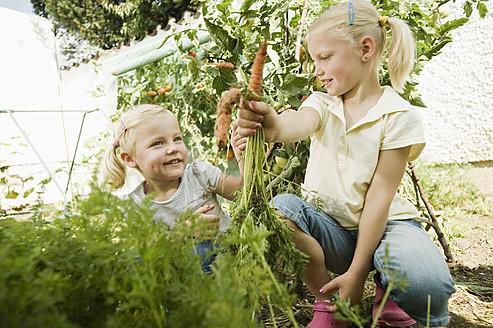 Germany, Bavaria, Girls gathering carrots in vegetable garden - RNF001013