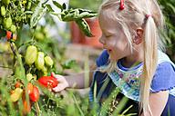 Germany, Bavaria, Girl picking tomatoes in garden - HSIYF000010