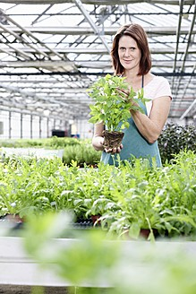 Germany, Bavaria, Munich, Mature woman in greenhouse with basil plants - RREF000003