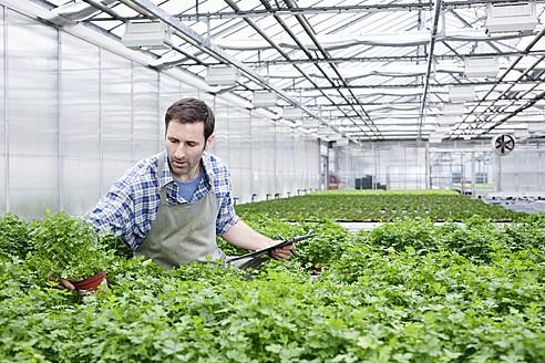 Germany, Bavaria, Munich, Mature man examining parsley plants in greenhouse - RREF000030